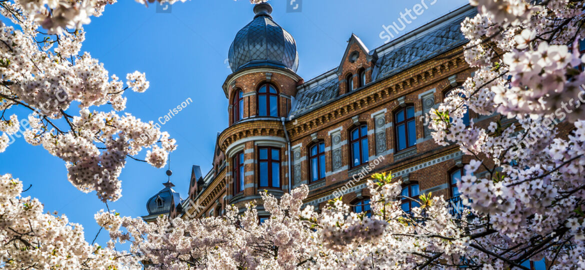 stock-photo-building-framed-in-cherry-blossom-spring-has-arrived-in-gothenburg-and-cherry-trees-are-in-full-272653541